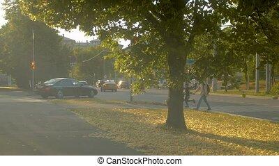 Road and crosswalk