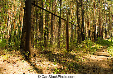 road and fence in a pine forest