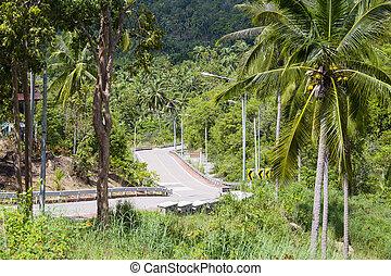 Road and palm tree. Island Koh Phangan, Thailand
