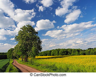 Road and rapeseed - Road, chestnut, sky  and rapeseed field