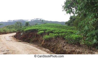 road and tea plantation field on Sri Lanka - agriculture,...