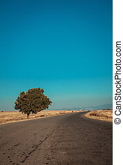 Road and the tree in desert