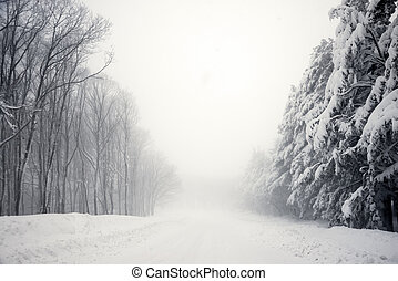 Road and trees in blizzard