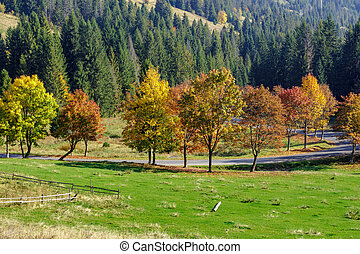 road behind autumn forest - asphalt road going through green...