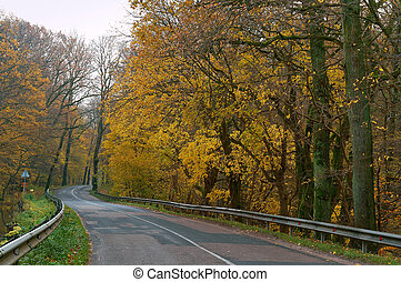 road between autumn trees, trees with yellow and red leaves on the side