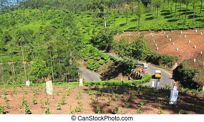 road between tea plantations in Munnar Kerala India