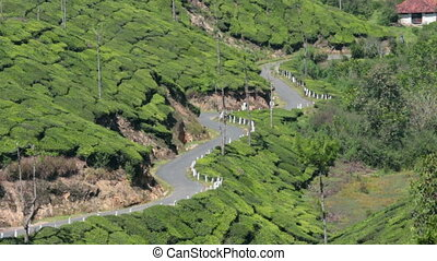 road between tea plantations in Munnar Kerala India