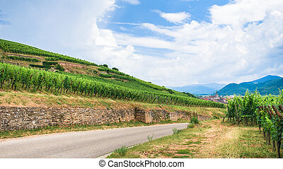 road between vineyards in Alsace Wine Route region