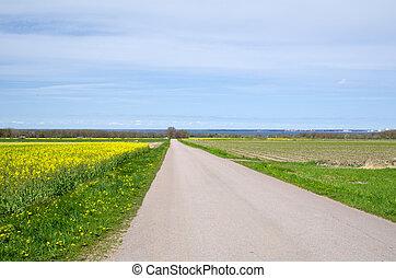 Road by rapefield