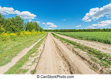 Road by the field at summer day time.