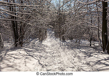 Road covered with snow. Winter path with frozen trees.