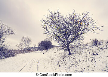 Road covered with snow with an appletree