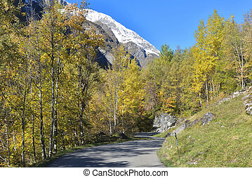 road crossing forest with snowy mountain background under blue sky in european Alps