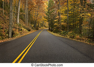 Road Curve In Rainy Mountain Forest