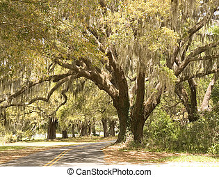 A small road curving through oak trees draped with spanish moss