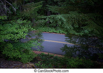 Road Cuts through Thick Oregon Forest