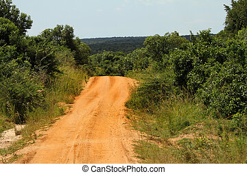 Road disappearing into the Jungle