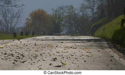 road fall leaves 01