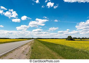 road flowering fields under the blue sky