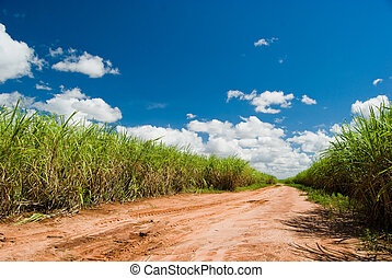 Road for the Sugar Cane Field. Brazil produces about...