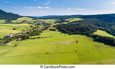 Road, forest, village and field summer landscape from above - drone view