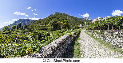 Road from town Sabbinoara to castle of Avio through vineyard in Etschtal in Italy, Europe