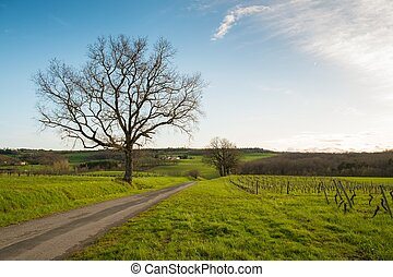 Road in a field by the old tree and vineyard