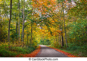 Road in a forest at autumn