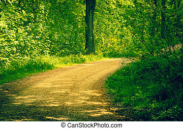 Road in a forest at springtime