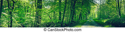 Road in a green beech forest