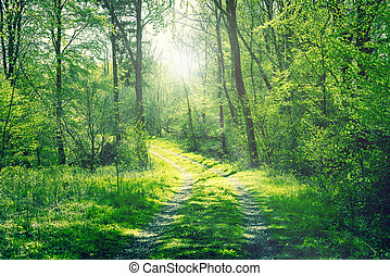 Road in a green forest with sunshine
