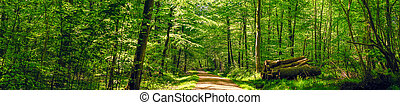 Road in a idyllic forest