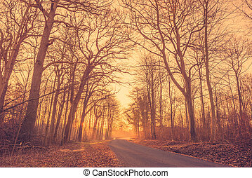 Road in a misty forest at sunrise
