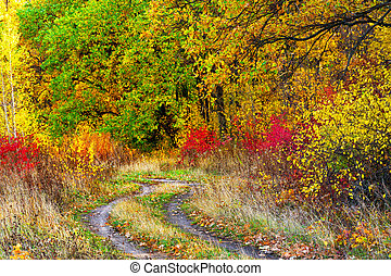 Road in a park with colorful leaves in autumn