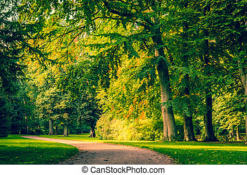 Road in a park with colorful trees