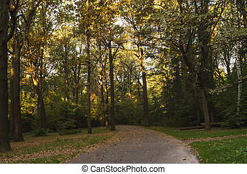 Road in a shady autumn park in the evening.