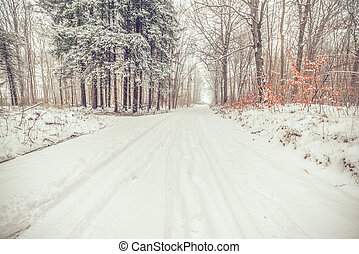 Road in a snowy forest