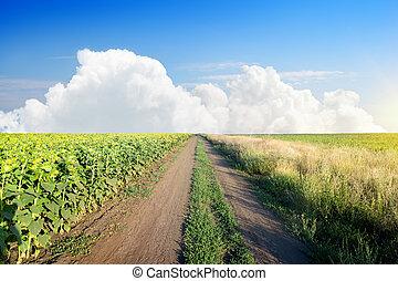 Road in a sunflower field