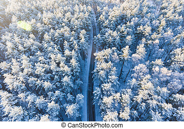 Road in a winter forest