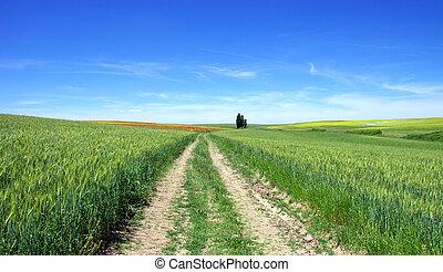 Road in Alentejo field at Spring time