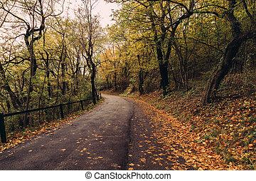 Road in Austria in the Fall