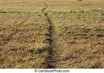 Road in autumn field