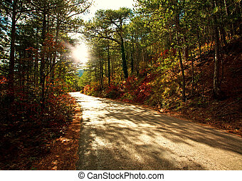 Road in autumn forest in light of the setting sun