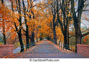 autumn park  - road in autumn park in Krakow