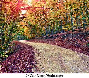 Road in autumn sunny forest