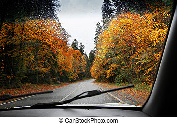 Road in autumnal rainy forest