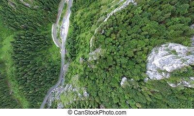 Road in coniferous forest, little stream. Mala Fatra,...