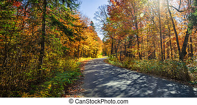 Road in fall forest