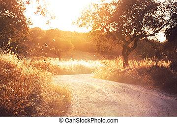 Road in field - Road in  meadows