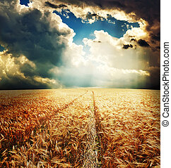 road in field with gold ears of wheat under sunrays